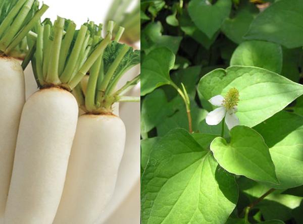 Mặt nạ chữa trị tàn nhang hiệu quả với củ cải trắng