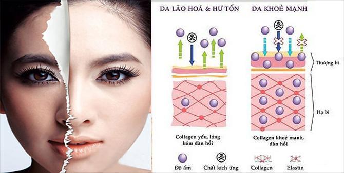collagen-la-gi-collagen-co-tac-dung-gi-trong-lam-dep2