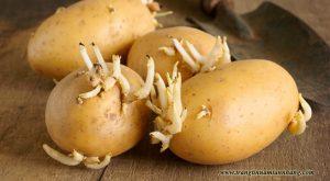 cách trị tàn nhang bằng khoai tây
